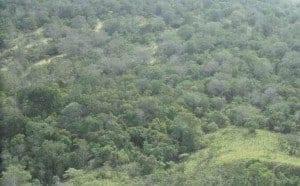 יער גשם טרופי